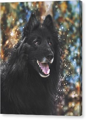 Working Dog Canvas Print - Belgian Sheepdog Art 9 by Wolf Shadow  Photography