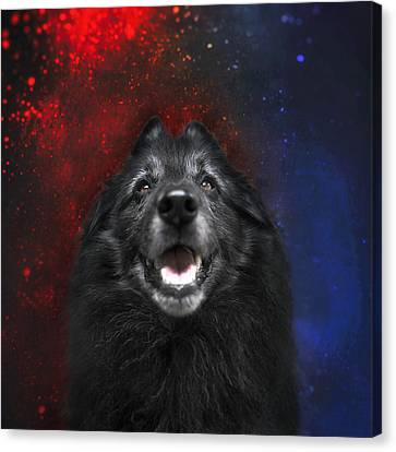 Belgian Sheepdog Artwork 16 Canvas Print by Wolf Shadow Photography