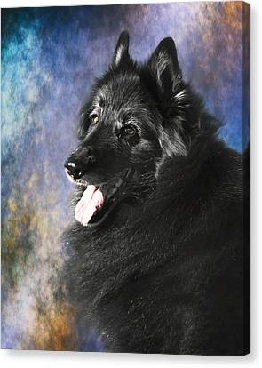 Belgian Sheepdog Portrait 12 Canvas Print by Wolf Shadow  Photography