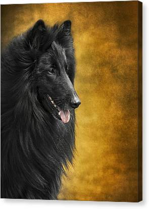 Belgian Sheepdog Portrait Canvas Print by Wolf Shadow  Photography