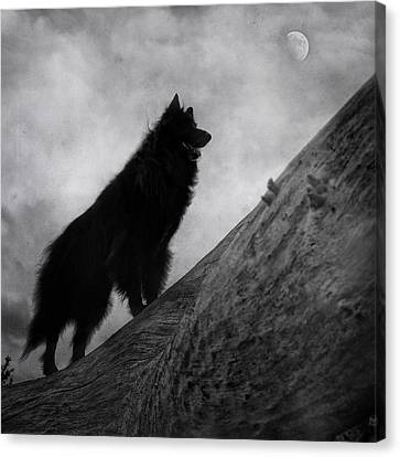 Working Dog Canvas Print - Belgian Shepherd Artwork 8 by Wolf Shadow  Photography