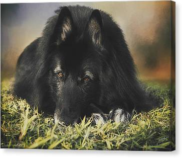 Belgian Shepherd Groenendael  Portrait 13 Canvas Print by Wolf Shadow  Photography