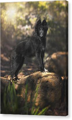 Belgian Shepherd Puppy In The Woods Canvas Print by Wolf Shadow  Photography