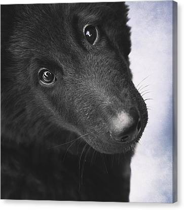 Belgian Shepherd Puppy Canvas Print by Wolf Shadow  Photography