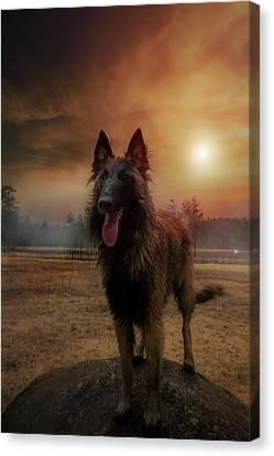 Belgian Shepherd Canvas Print