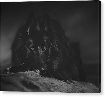 Working Dog Canvas Print - Belgian Shepherd Artwork 10 by Wolf Shadow  Photography