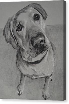 Bella Bean Labrador Retriever Canvas Print by Ruthie Sutter