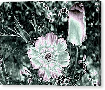 Bella Flora 3 Canvas Print by Will Borden