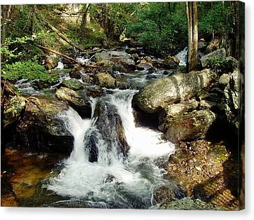 Below Anna Ruby Falls Canvas Print