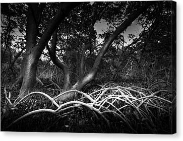 Below The Canopy Canvas Print