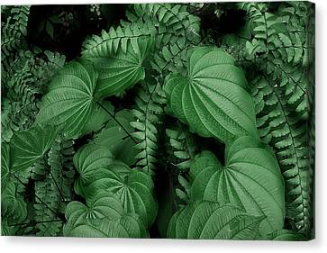 Below The Canopy Canvas Print by Mike Eingle
