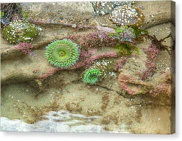 Below The Surface Canvas Print by Kristina Rinell