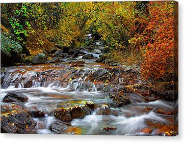 Below The Waterfall Canvas Print by Tim Reaves
