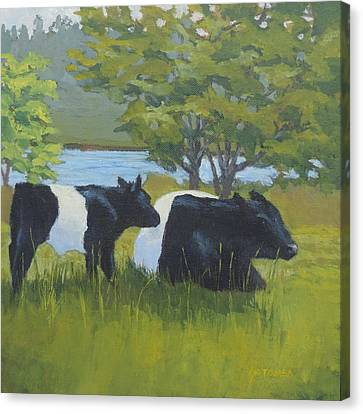 Belted Galloway And Calf Canvas Print
