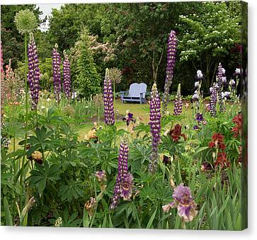 Canvas Print - Bench Through The Lupines by Jean Noren