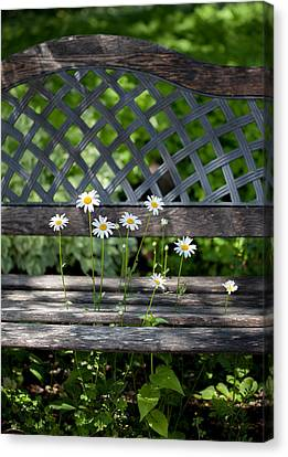 Benched Canvas Print by Aaron Aldrich
