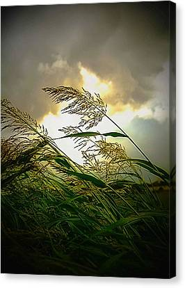 Bend In The Storm Canvas Print by Ken Gimmi