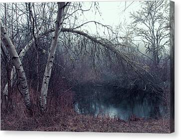 Canvas Print featuring the photograph Bending Birch by Andrew Pacheco