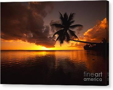 Bending Palm Canvas Print by Ron Dahlquist - Printscapes
