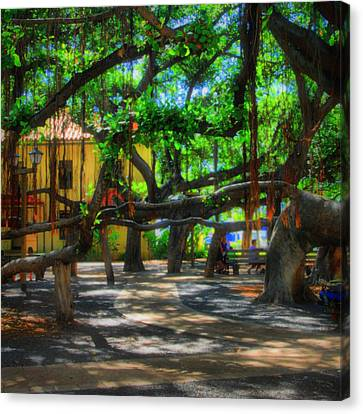 Beneath The Banyan Tree Canvas Print