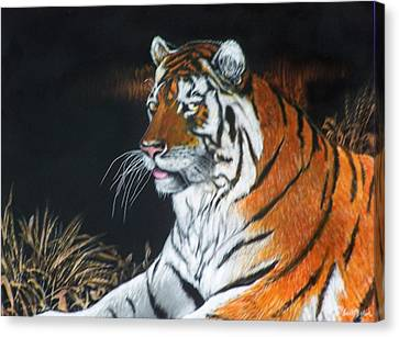 Bengal Boy  Sold Canvas Print