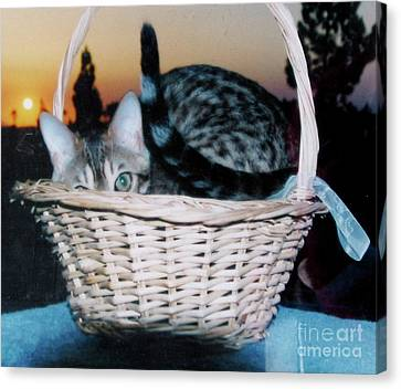 Canvas Print featuring the photograph Bengal Cat At Sunset by Phyllis Kaltenbach