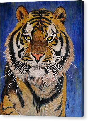 Bengal Tiger Canvas Print by Don MacCarthy