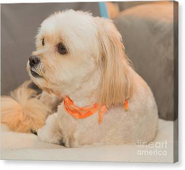 Benji On The Look Out Canvas Print