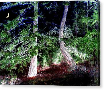 Bent Fir Tree Canvas Print by Will Borden