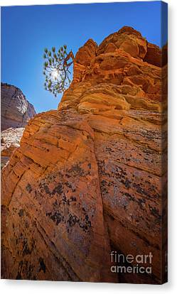 Zion National Park Canvas Print - Bent Juniper by Inge Johnsson