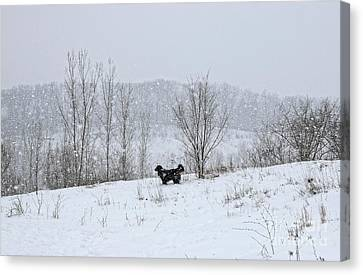 Bernes Mountain Dog In Snow Canvas Print by Charline Xia