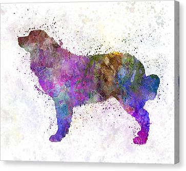 Bernese  Mountain Dog In Watercolor Canvas Print by Pablo Romero