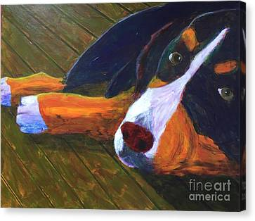 Bernese Mtn Dog On The Deck Canvas Print