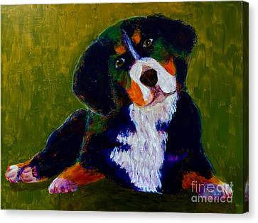 Bernese Mtn Dog Puppy Canvas Print