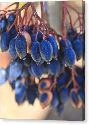 Berries Blue Too Canvas Print