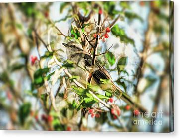 Canvas Print featuring the photograph Berry Merry Mockingbird by Kerri Farley