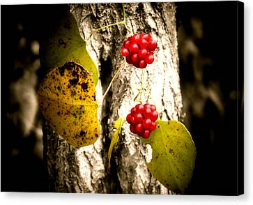Berry Special Canvas Print by Karen Scovill
