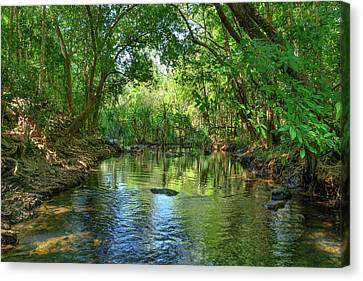 Berry Springs Canvas Print