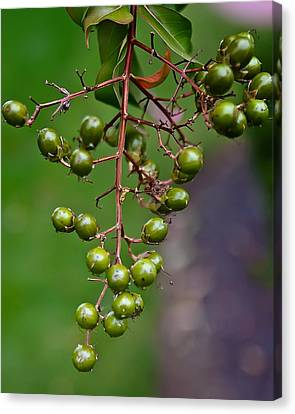 Berry Truly Yours  Canvas Print by Michael Putnam
