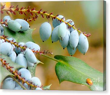 Berrylicious  Canvas Print by Rand Herron