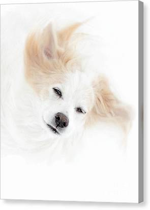 Best Friend Canvas Print by Sue Stefanowicz