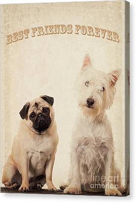 Best Friends Forever Canvas Print by Edward Fielding