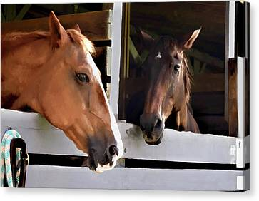 Best Friends Horse Chat Canvas Print by Sandi OReilly