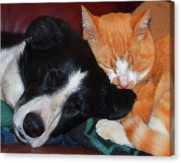 Best Friends Canvas Print by Susie Fisher