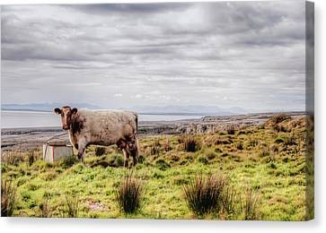 Besty My Irish Cow Canvas Print by Natasha Bishop