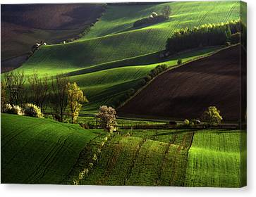 Canvas Print featuring the photograph Between Green Waves by Jenny Rainbow