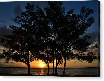 Canvas Print featuring the photograph Between The Trees by Melanie Moraga