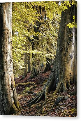 Between Trees Canvas Print by Philip Openshaw