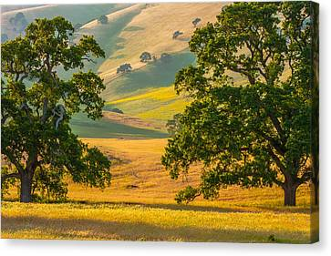 Between Two Trees Canvas Print by Marc Crumpler