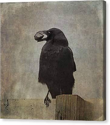 Canvas Print featuring the photograph Beware Of Crows by Sally Banfill